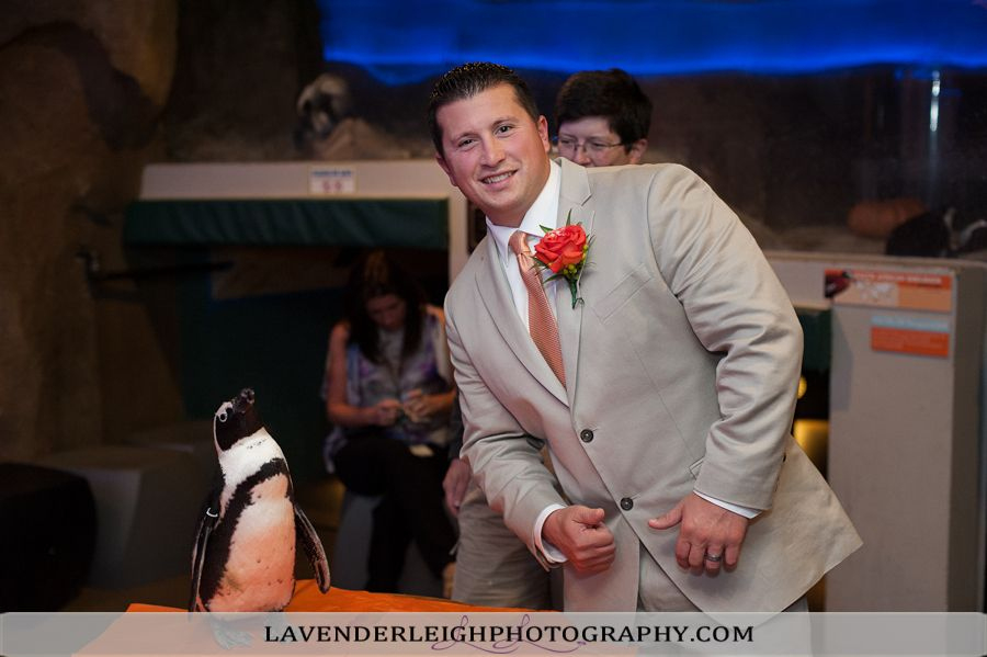 Pittsburgh Aviary| Pittsburgh Wedding Photographer | Pittsburgh Wedding Photographers | Lavender Leigh Photography | Blog