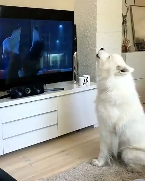 Cutest Video Of This Dog 😁