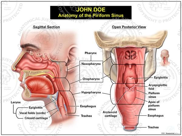 This exhibit depicts the normal sagittal and open posterior anatomy ...