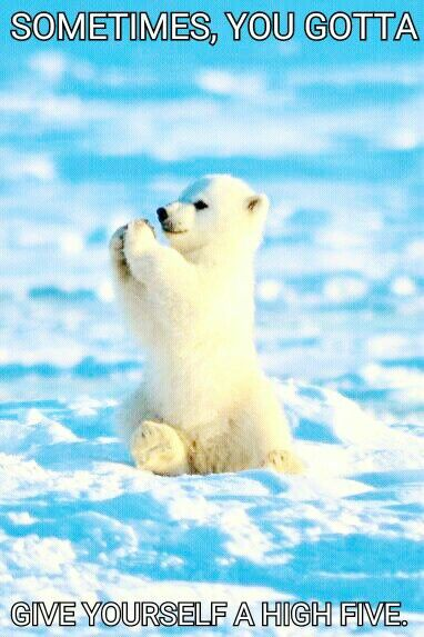 A Happy Meme To All Of Those Who Have No One To High Five High Five Polar Bear Memes