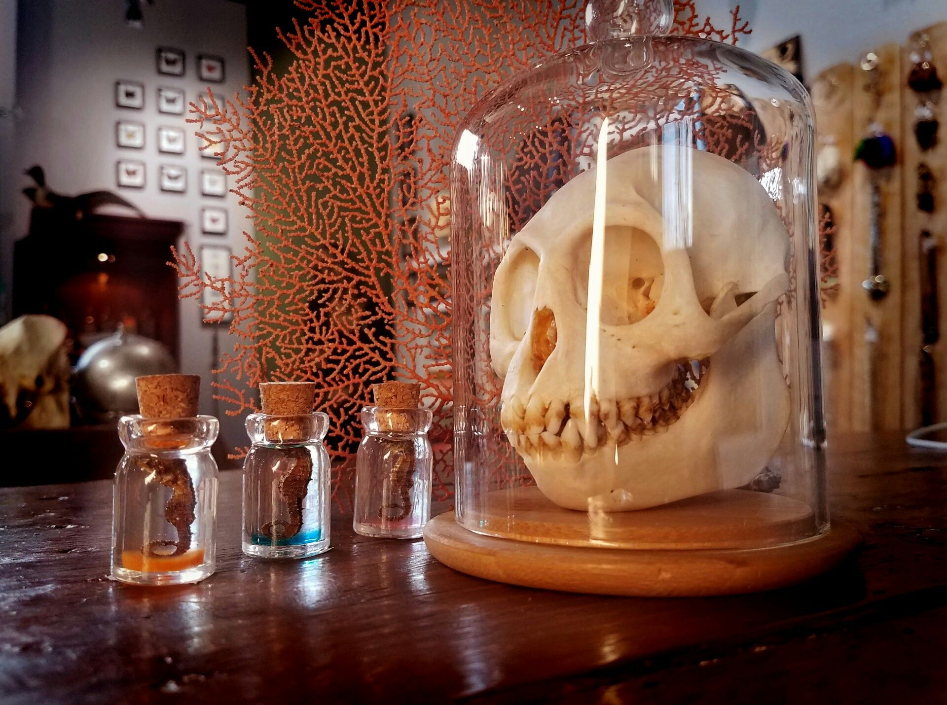 Escape Rooms Haunted houses near me, Real haunted houses
