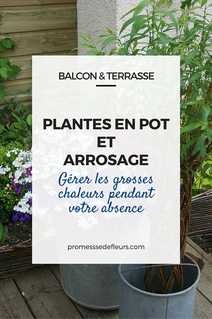 Arrosage Pour Plantes En Pot plantes en pot et arrosage : gérer les grosses chaleurs