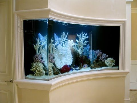 Custom aquarium builders for Custom fish tanks