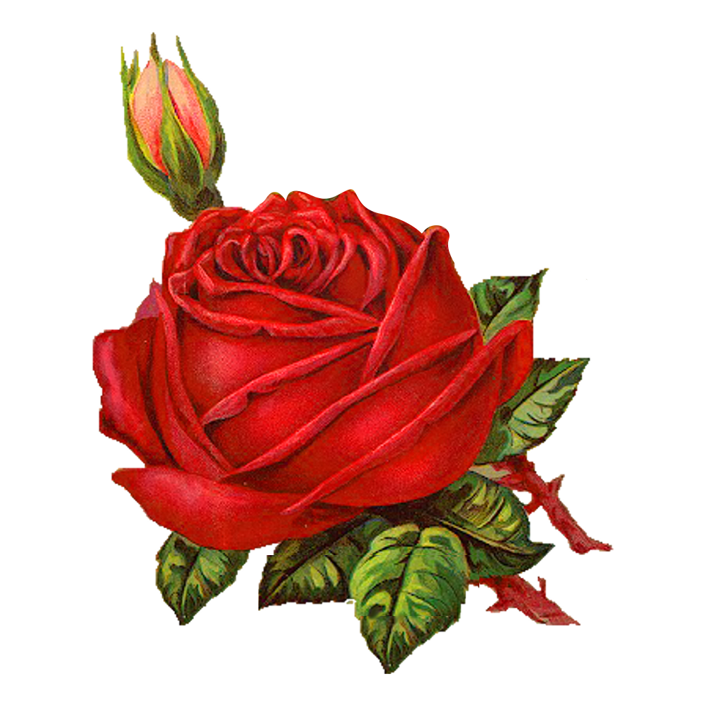 Free download valentine rose png image high quality It can