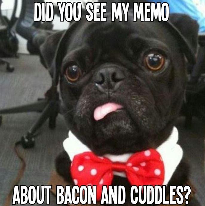 Cute Black Pug Is One Of Our Favorite Loldogs Cute Pugs Cute
