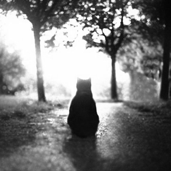 Cat photography, animal, cat photo, black and white, fine art print, monochromatic, moody, square photo, wall decor, viviarte