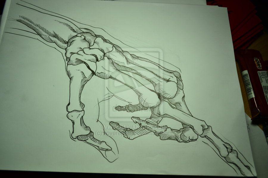 skeleton_hand_by_ilovereptar-d50y9wu.jpg (900×600)