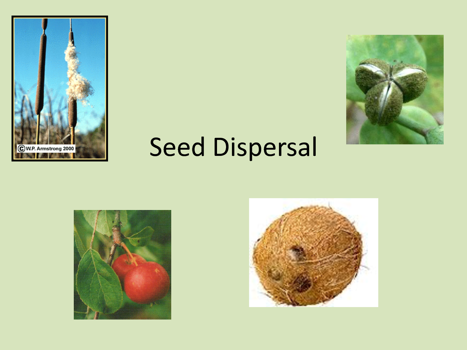 Seed Dispersal Powerpoint Download Or Print Each Page