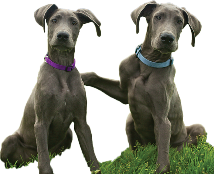 Cats And Dogs For Adoption Petsmart Saves Lives Click On Picture Dog Adoption Dogs Dog Cat