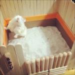 Diy Hamster Bath House Hamster Diy Diy Hamster Toys Hamster Toys