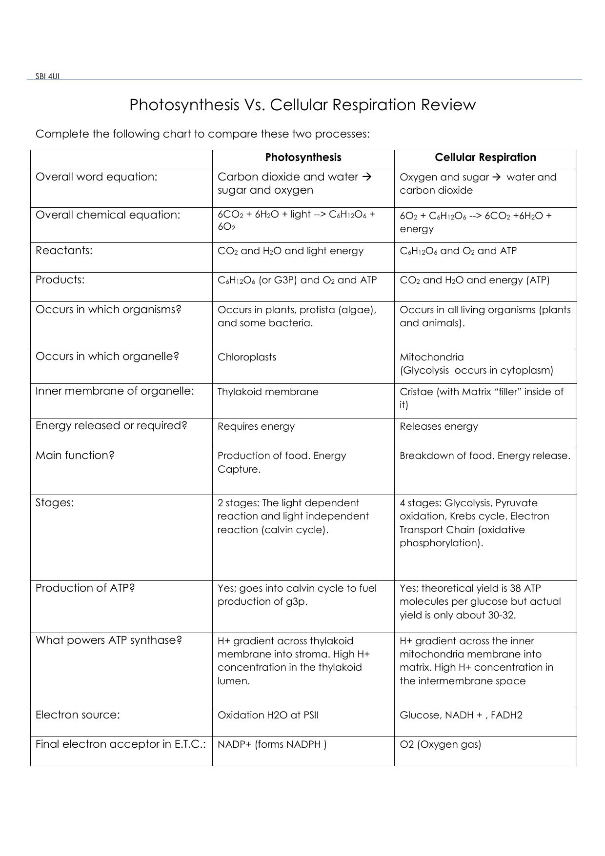 Cellular Respiration Worksheet Answer Key Lovely High