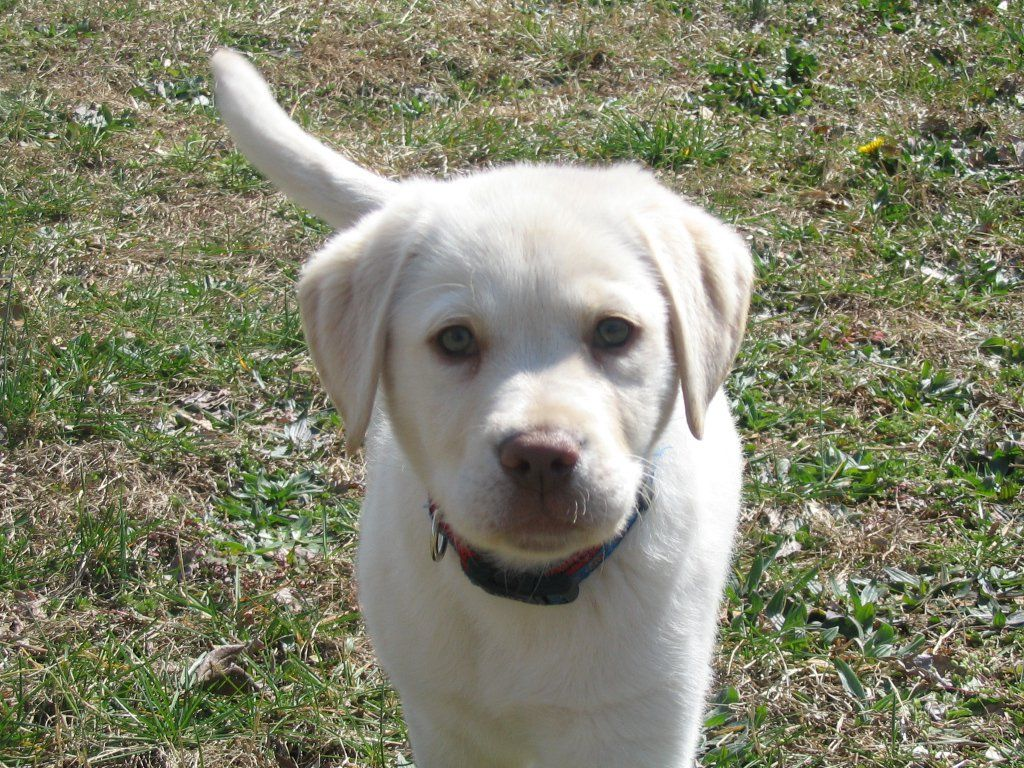Puppy Academy class photo!