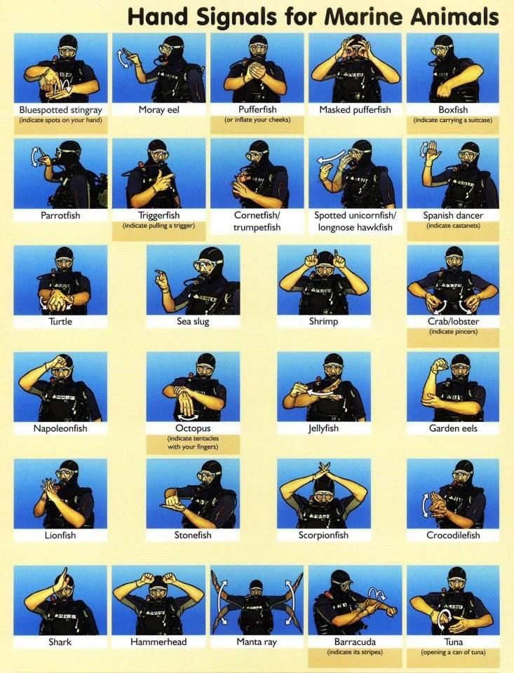 Scuba Hand Signals for Marine Animals   SCUBA   Scuba diving