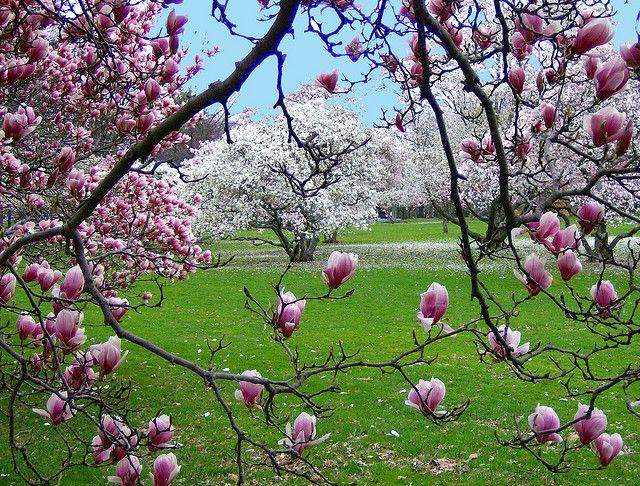 Spring Scene Blossoms In Warinanco Park Elizabeth Nj By Ww3billard Via Flickr Spring Scene Spring Scenery Spring Pictures