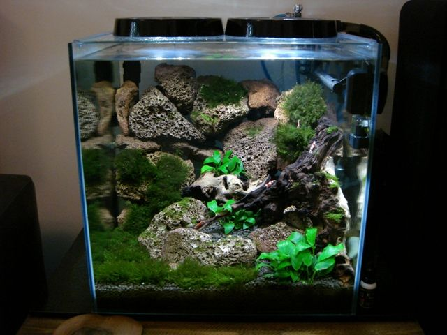 Shrimp tank aquascape planted tank aquascaping for Shrimp fish tank