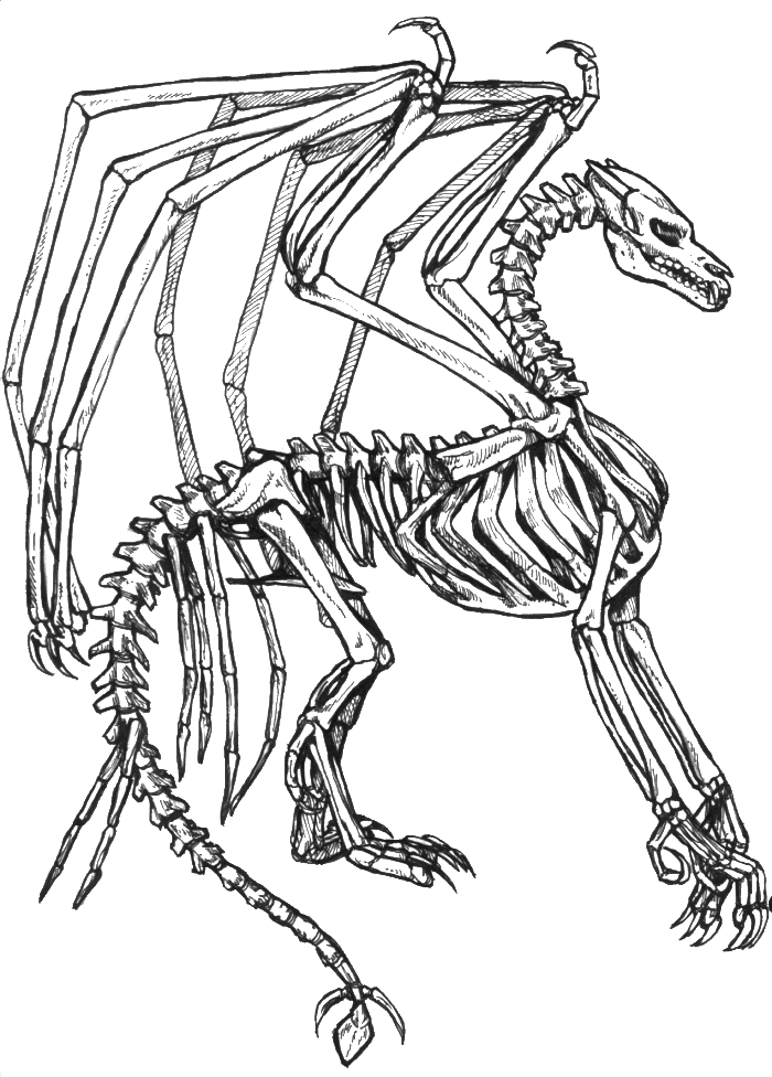 Dragon Skeleton Drawing : dragon, skeleton, drawing