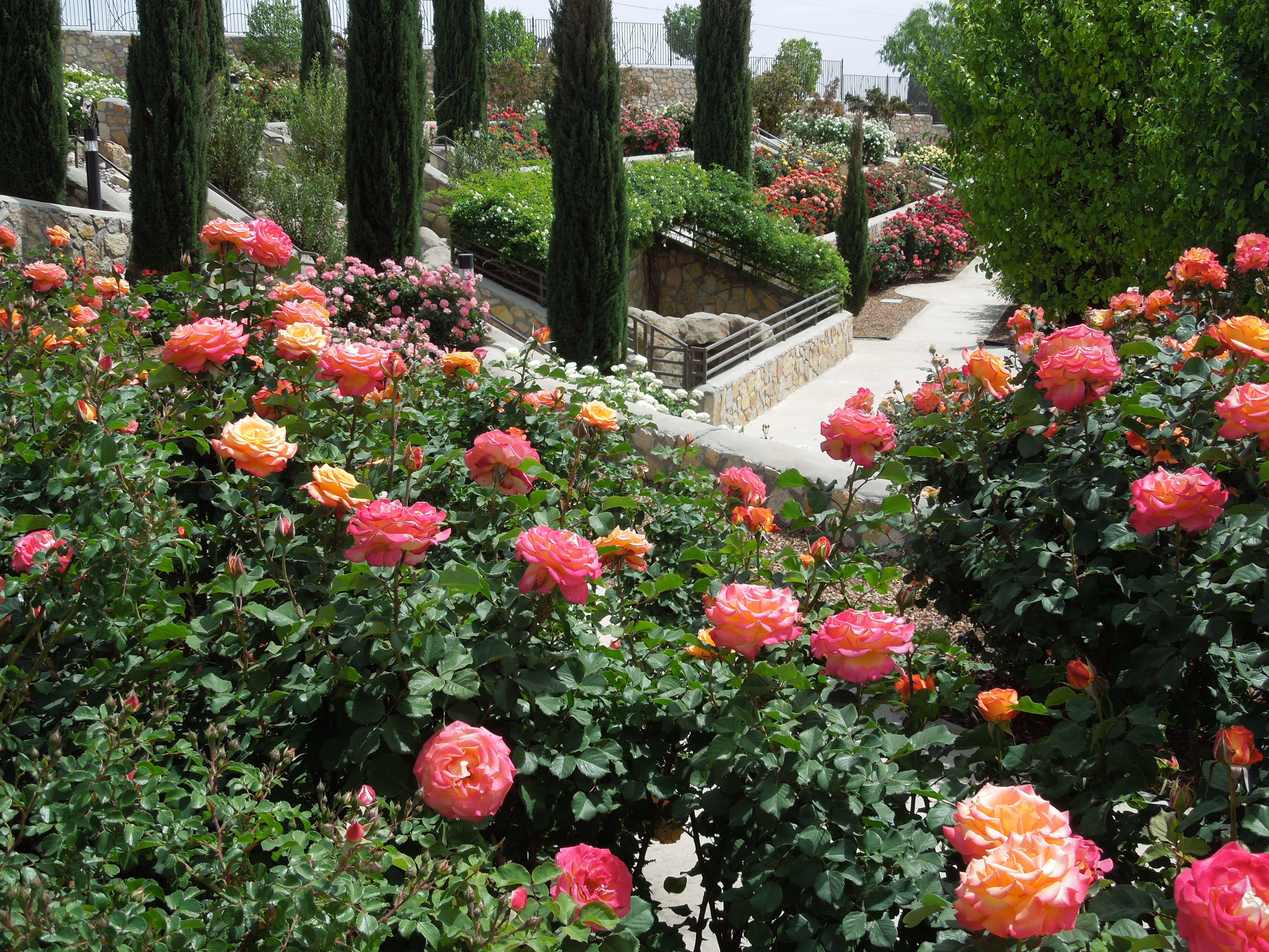 Municipal Rose Garden, El Paso, TX