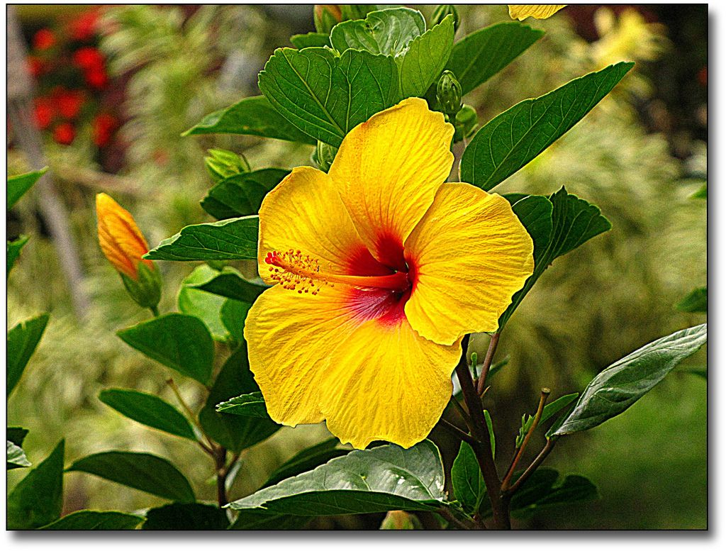 Hawaiian Flowers Hawaiian Flowers Names
