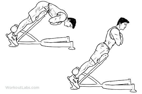Back Extensions / Hyperextensions   Illustrated Exercise guide - WorkoutLabs   Health & Fitness ...