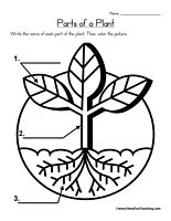 math worksheet : 1000 images about plant life cycle on pinterest  plant life  : Kindergarten Plant Worksheets