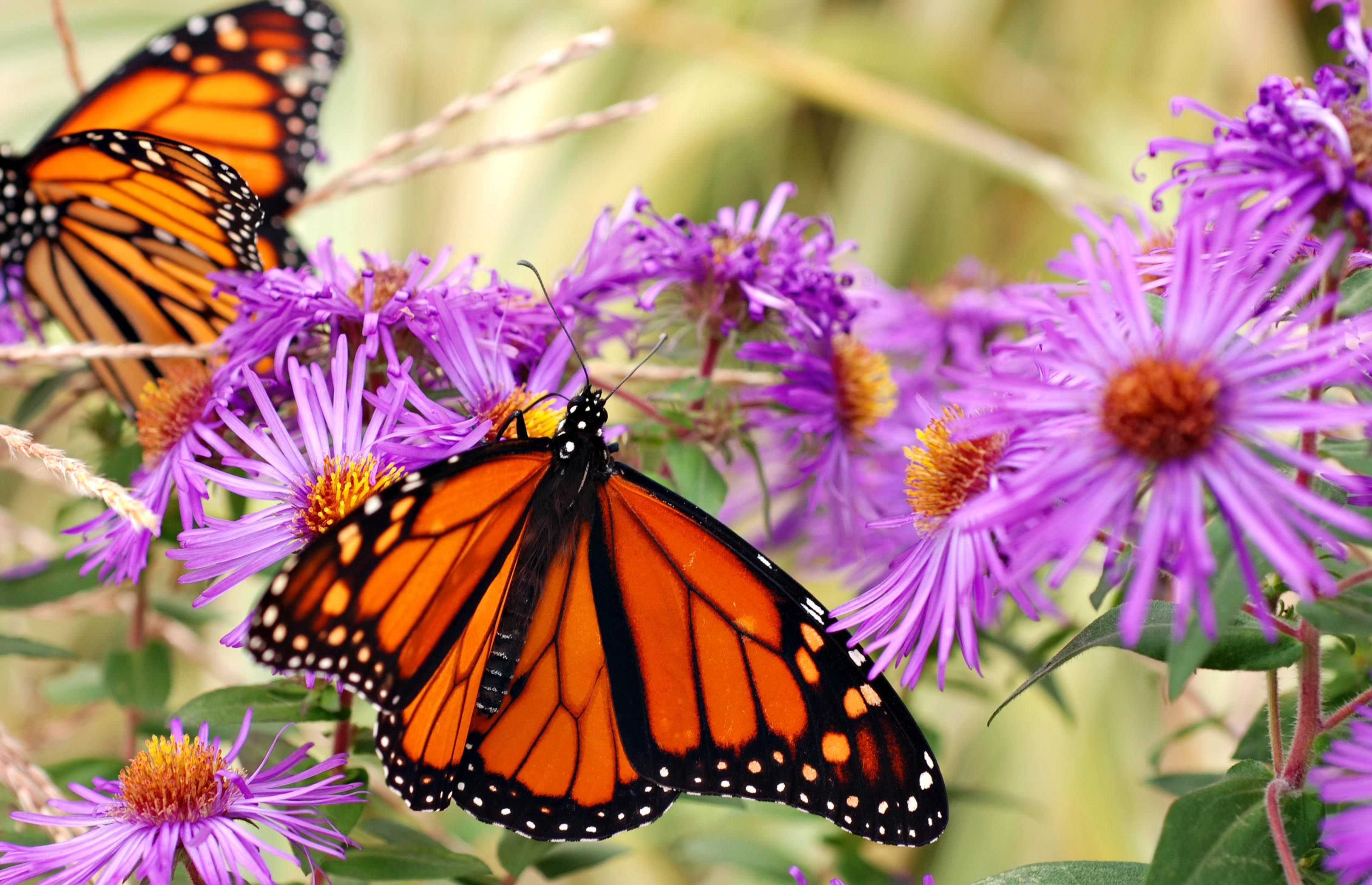 How to Make a Butterfly Island Bed | Butterfly plants ...