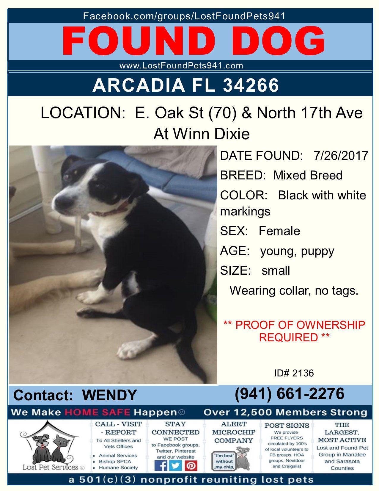 Do You Know Me Found Dog Pitbull Mix Arcadia Fl Desotocounty