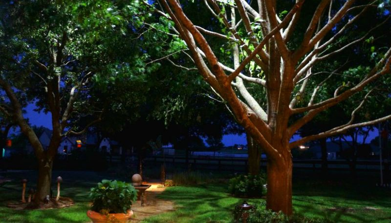 Moonlighting Tree Lighting In 2019 Landscape