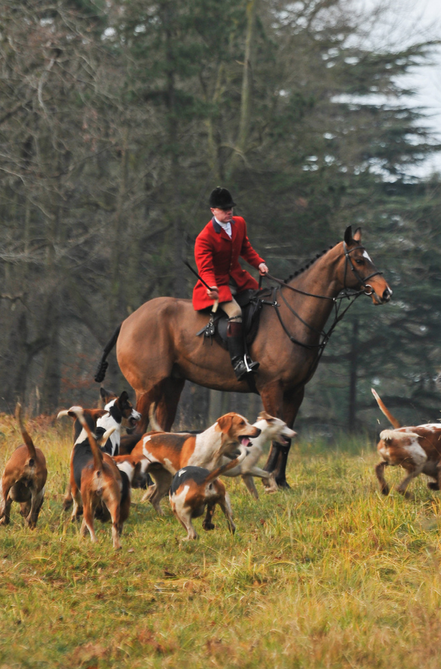 I would love to go hunting with beagles. And chasing after