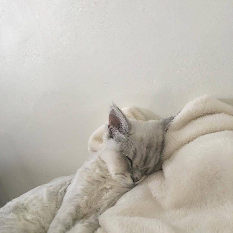 Photo of – wenxz gatos mascotas lindo