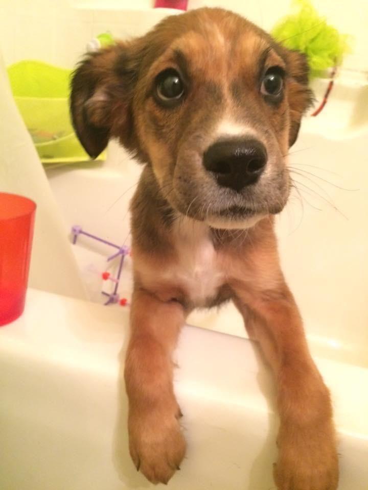 Adopt Lindsay on Pup, Adoption, Pets