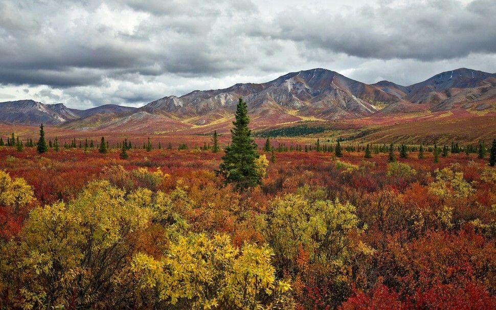 Parque Nacional Denali, Alaska.
