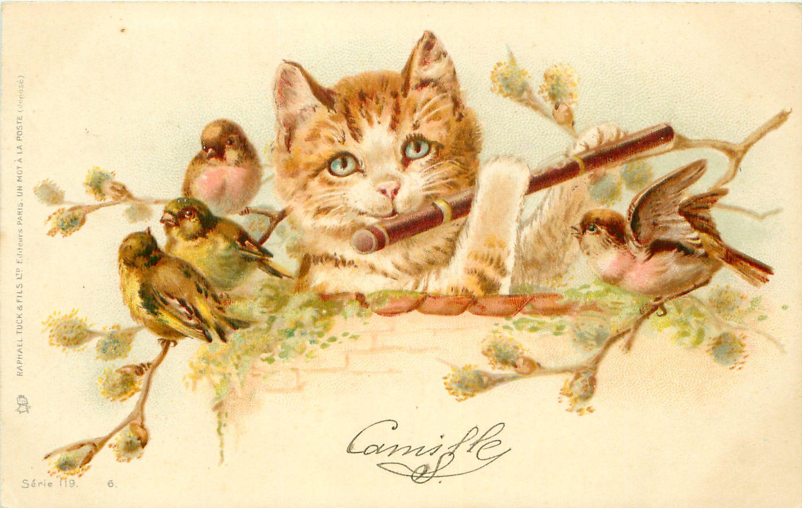 Свадьбе, коты на старых открытках