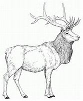 Image result for elk coloring pages to print (с ...