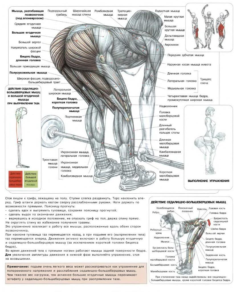 картинки с упражнениями для мышц ног приведет всех восторг