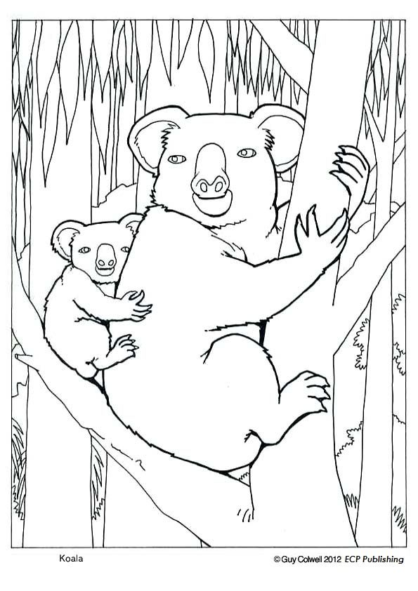 Koala Coloring Pages Colouring Pictures