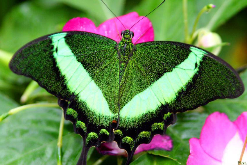 shimming green by bexa