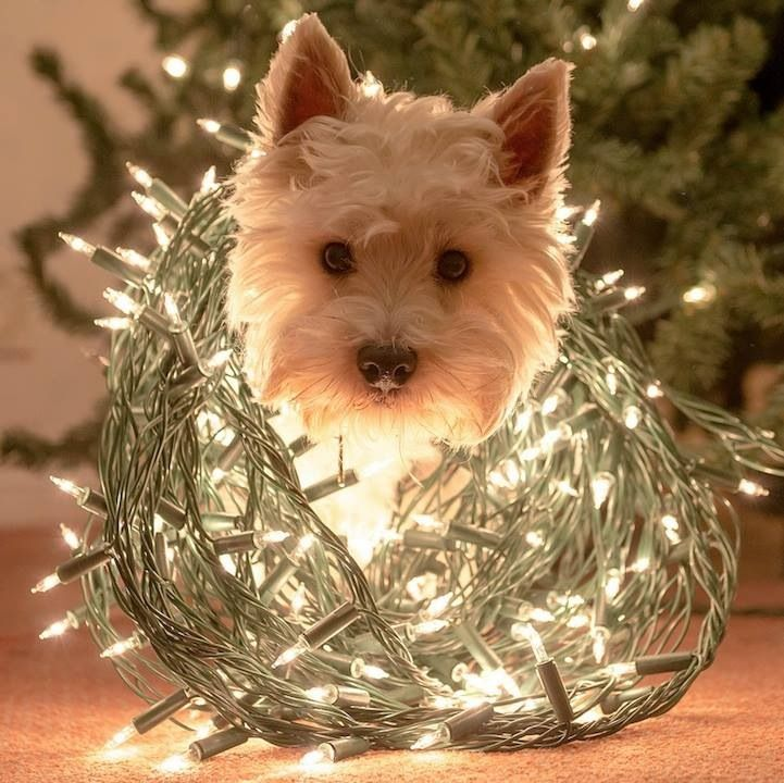 Pin By Laura Gross On Too Cute Cute Animals Christmas Dog Animals
