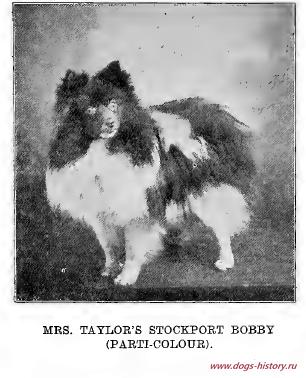 Pin Ot Polzovatelya Nadezhda Na Doske Dogs History Ru