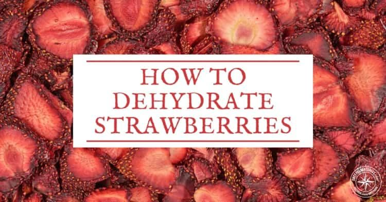 How To Dehydrate Strawberries And Why Shtfpreparedness Dehydrated Strawberries Dehydrator Dehydrator Recipes