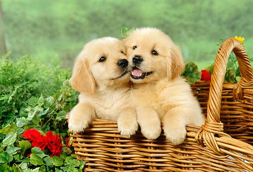 15 Things Every New Puppy Parent Must Have Puppies Cute Animals