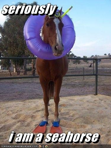 Cute Animals With Captions | Funny horse memes, Cute ...