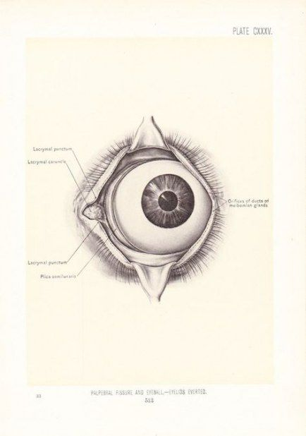 20+ Ideas medical doctor tattoo human anatomy #tattoo #medical