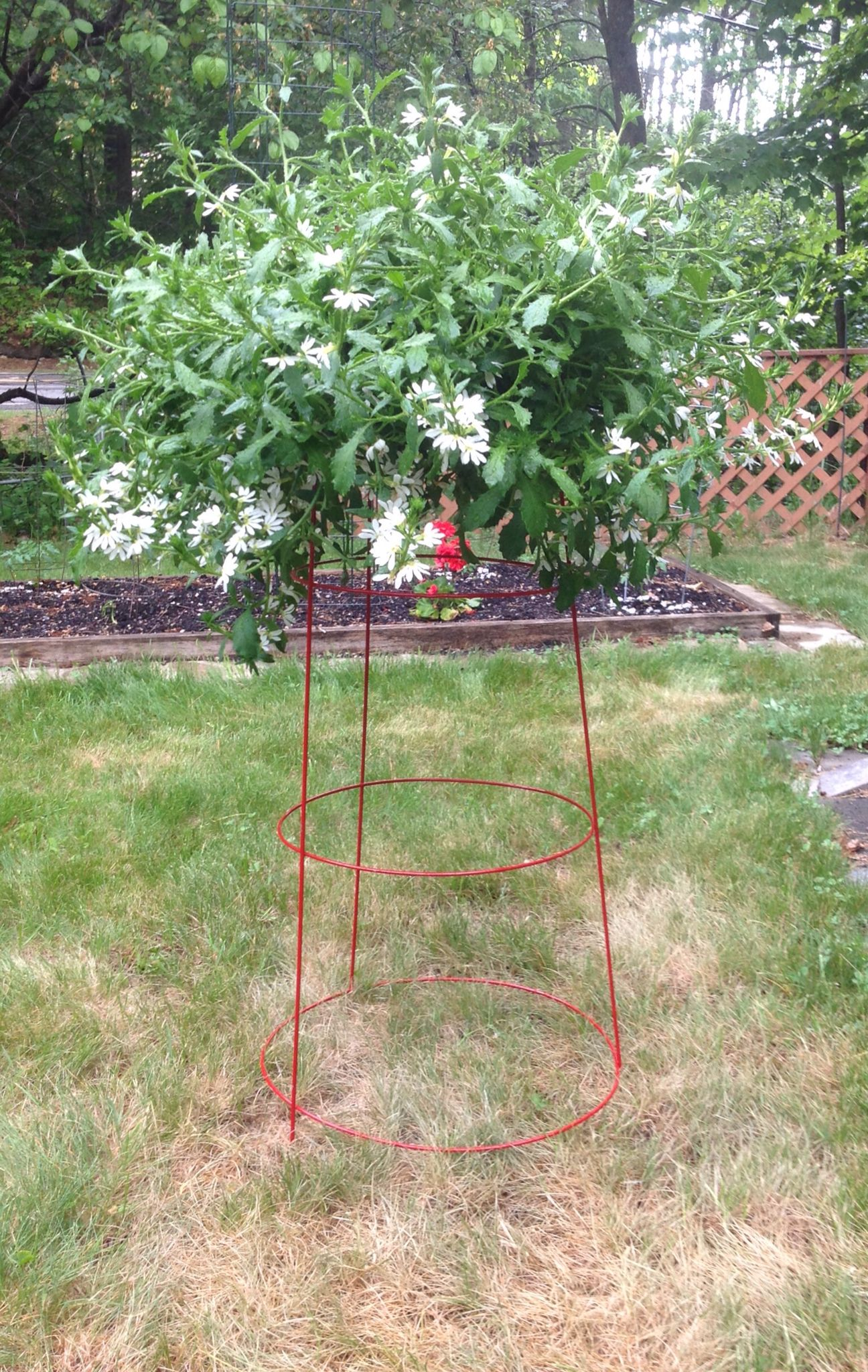 Upside Down Tomato Cage Plant Holder Stuff I Have Made