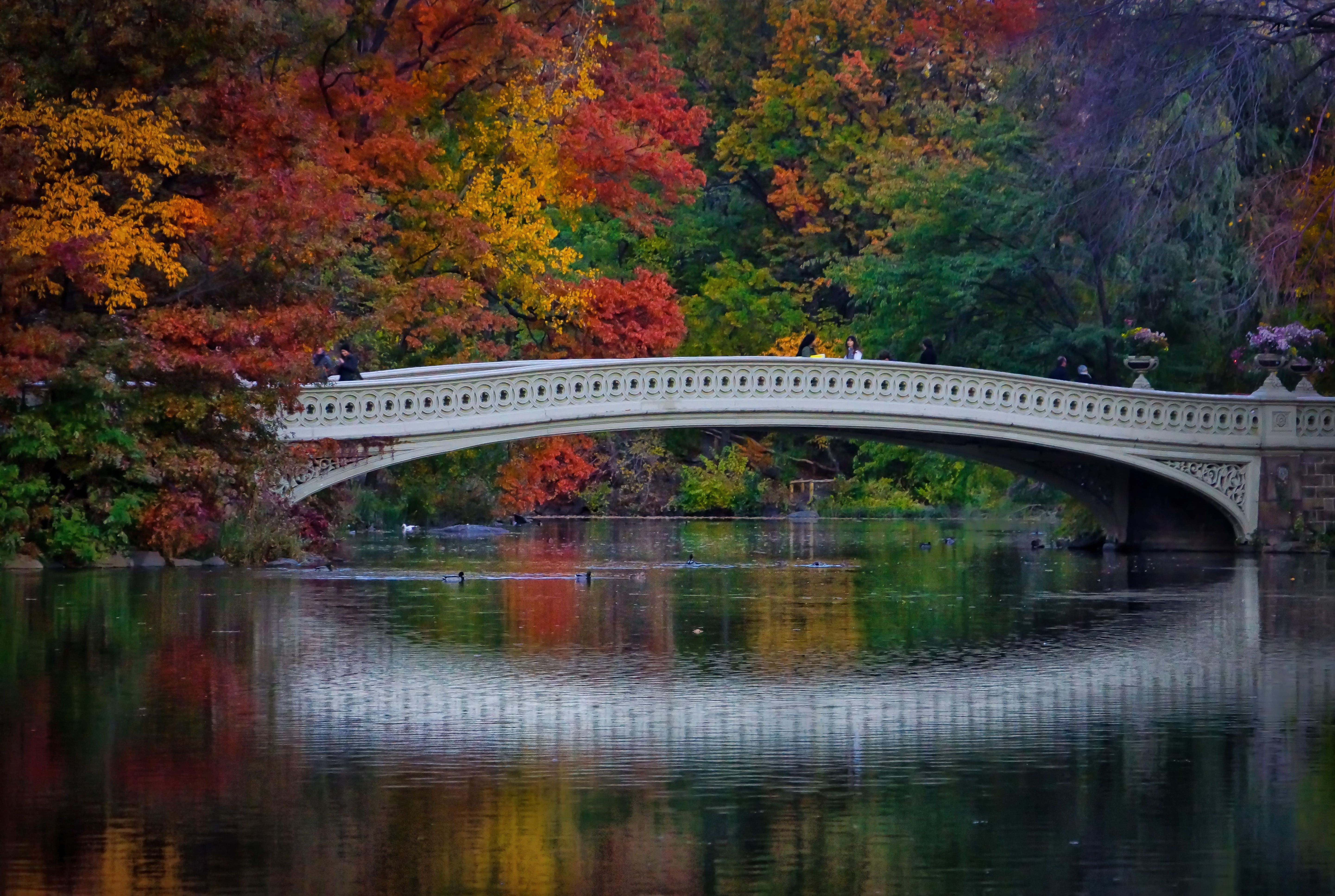 NYC Central Park Bow Bridge in the Fall