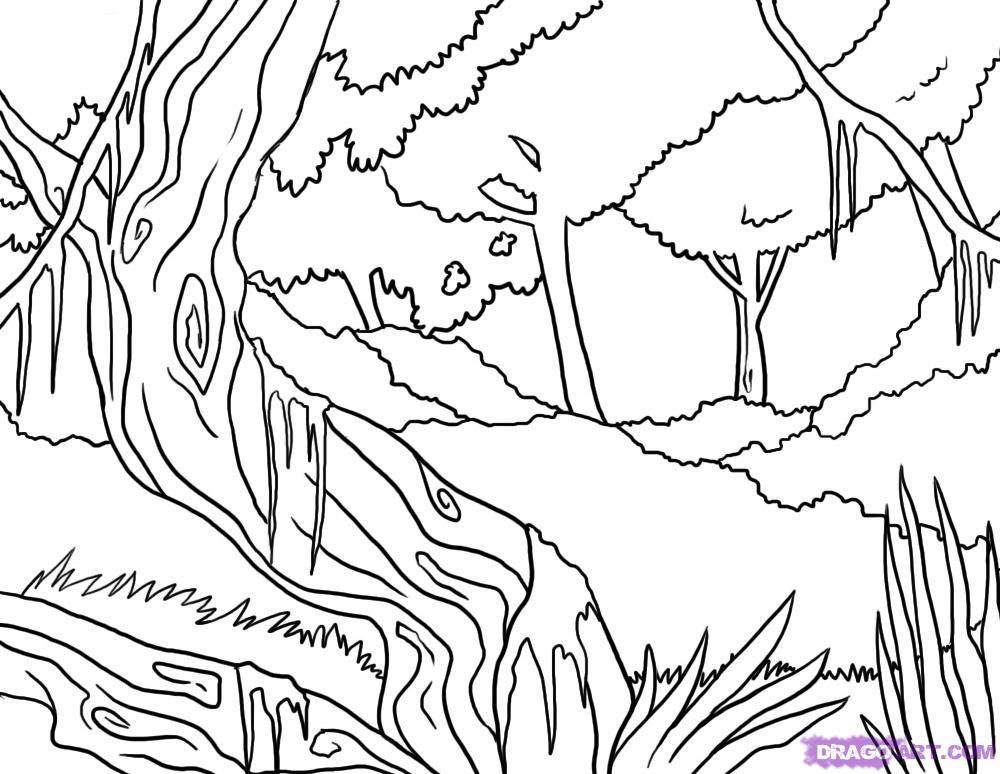 Line Art Jungle : How to draw a jungle step by landscapes landmarks