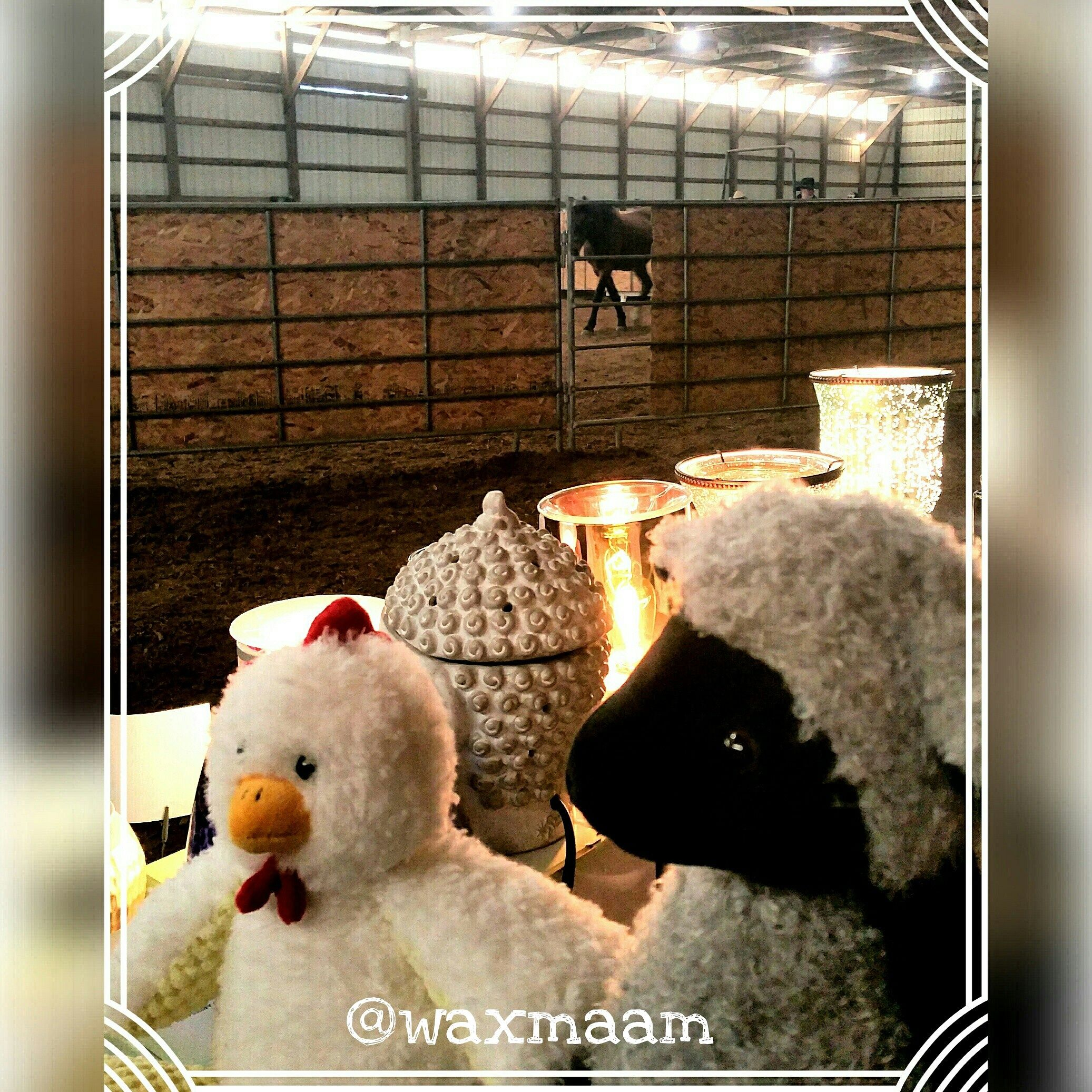 Cluck and Lulu hanging out with the horses today. Making it #smell good in here! #Horse and #Hound, Lee's Summit #Equestrian. Til 4:30pm. Stop by and see us. #Scentsy #waxmaam