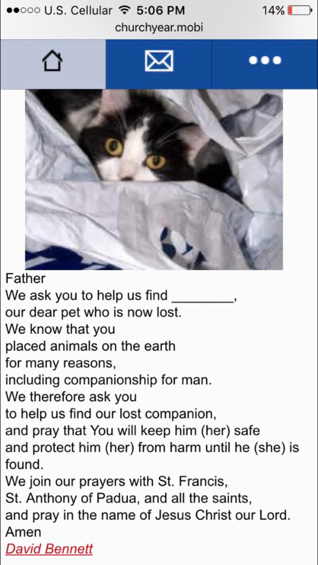 Prayer for lost pet Losing a pet, Pets, Prayers