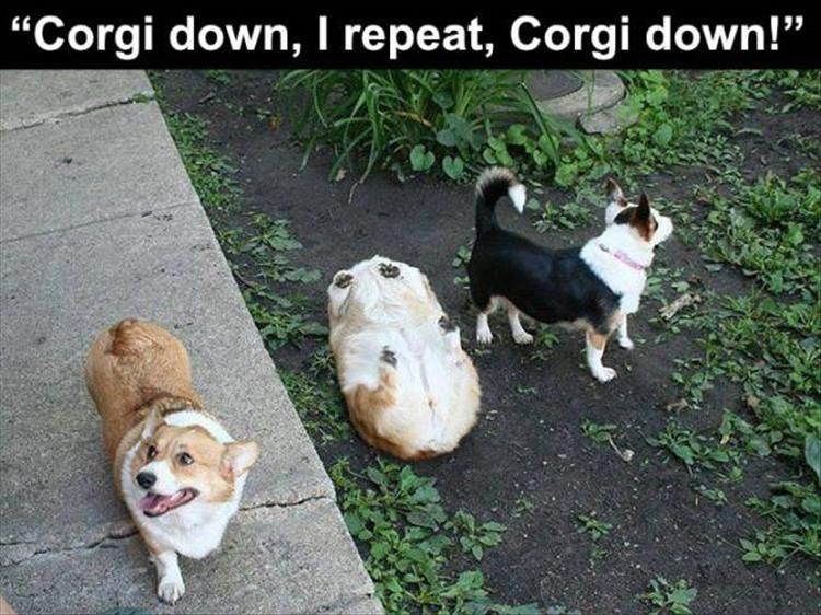 Funniest Animal Memes In The World : Funny animal memes to make you laugh till you drop