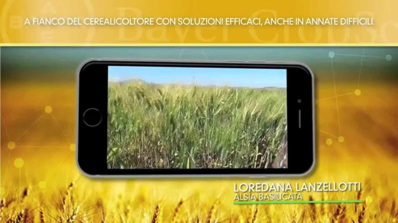 FOGLIE TV - Bayer CropScience a fianco del cerealicoltore