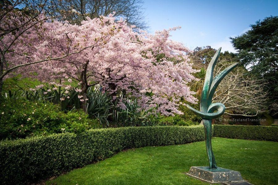 Norwood Memorial Sculpture And Cherry Blossom In Wellington Botanic Garden Botanical Gardens Norwood Blossom